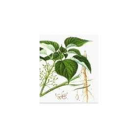 Nettle Root P.E. 3 4-divanillyltetrahydrofuran 95% HPLC 500Grams/bag